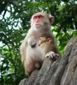 Famille de singe — Photo
