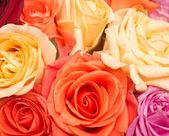 Rose background — Stock Photo