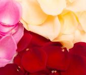 Petal background — Stock Photo