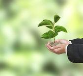 Investitionen in Öko-Unternehmen — Stockfoto