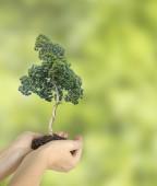 Baum in händen — Stockfoto