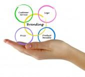 Branding diagram — Stock fotografie