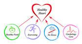 健康的心脏 — 图库照片