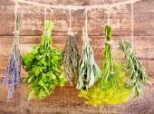 Varias hierbas frescas colgando — Foto de Stock