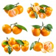 Set of fresh tangerines with leafs  — Stock Photo #61404073