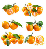 Set of fresh tangerines with leafs  — Stock Photo
