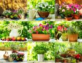 Collage van zomerbloemen — Stockfoto