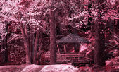 Ir forest landscape  — Stock Photo