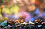 Soft colored autumn background — Stock Photo