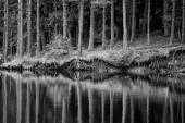 Bw lake and trees  — Stock Photo