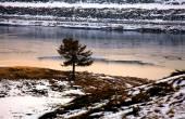 Un arbre d'hiver — Photo