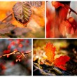 Autumn red details — Stock Photo #57291649