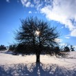 Square winter tree — Stock Photo #59615945