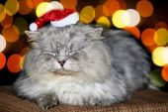 Kočičí vánoce — Stock fotografie