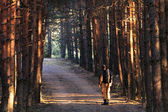 Hiker in forest  — Stock Photo