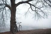Old bike near the tree — Stock Photo