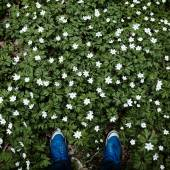 Hipsters legs in meadow of flowers — Stock Photo