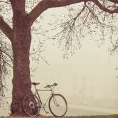 Vintage bike near tree in fog — Stock Photo