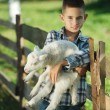 Boy with lamb on the farm — Stock Photo #80152580