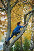 Boy climbs up the tree in park — Stock Photo