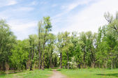 Spring in park Green Island, Omsk, Russia. — Stock Photo