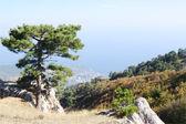 On top of Ai-Petri plateau, view of  coast, Crimea. — Stock Photo