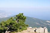 On top of AI-Petri plateau, view of Yalta coast, Crimea. — Stock Photo