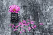 Flower in metal spring with loose petals on grunge wood surface  — Stockfoto
