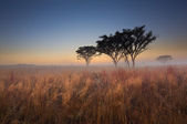 Cold cloudless morning sunrise with trees, brown grass and fog — Stock Photo