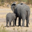 Elephant mother and calf walking while bonding relationship — Stock Photo #68306703