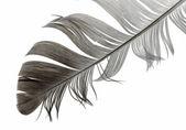 Bird feather — Stock Photo