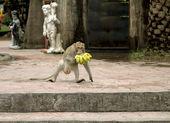 Monkey with bananas outdoors — Stock Photo