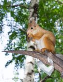 Squirrel on a tree in forest — Stock Photo
