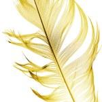 Big  feather on white — Stock Photo #66033055