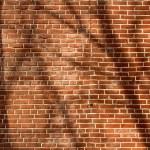 Tree Shadow on wall — Stock Photo #70955171