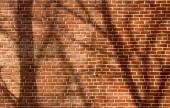 Tree Shadow on wall — Stock Photo