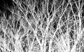 White tree branches on a black — Stock Photo