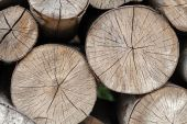 Background of firewood stacked in the woodpile — Foto Stock