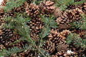 Background  of dried natural pine cones — Stock Photo