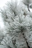 The winter impression into the frosty day — Stock Photo