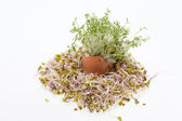 Fresh Alfalfa Sprouts and Spring Easter Egg — Stock Photo