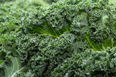 A healthy fresh curly kale — Stock Photo