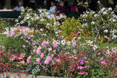 Paris - Flowers  in Square Jean XXIII near east side of Cathedral Notre Dame — Stock Photo