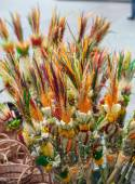 Retroadapter von Ostern Sonntag palm — Stockfoto