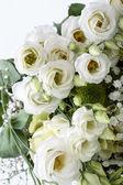 白バラのクローズ アップ — ストック写真