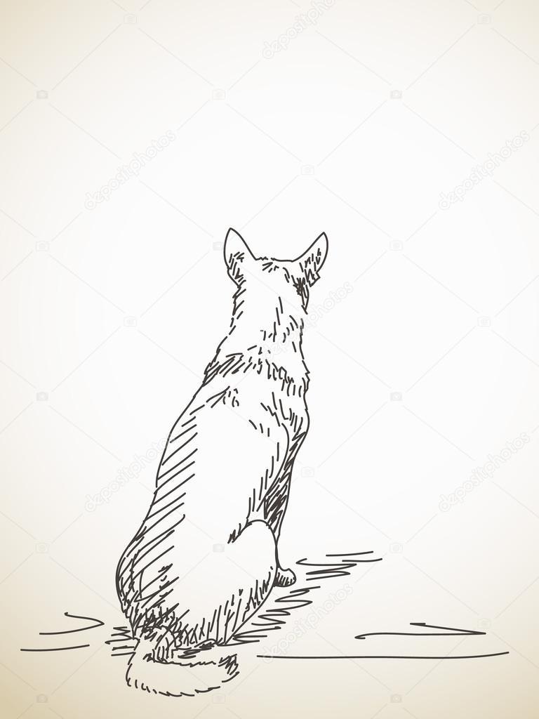 Собака сидящая спиной рисунок