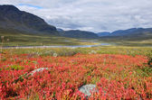 Arctic Lapland mountains in Sweden — Stock Photo