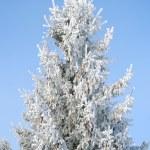White frozen tree — Stock Photo #67075975