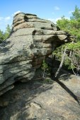Rock and pine trees — ストック写真