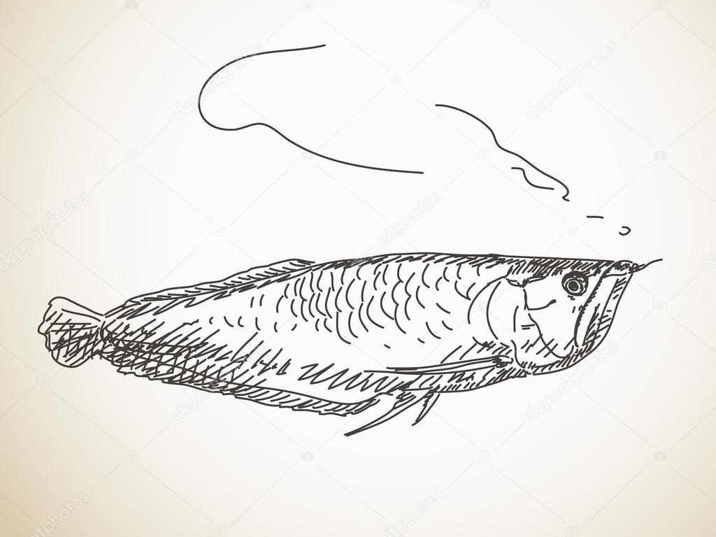 Croquis de poisson long image vectorielle olgatropinina - Croquis poisson ...